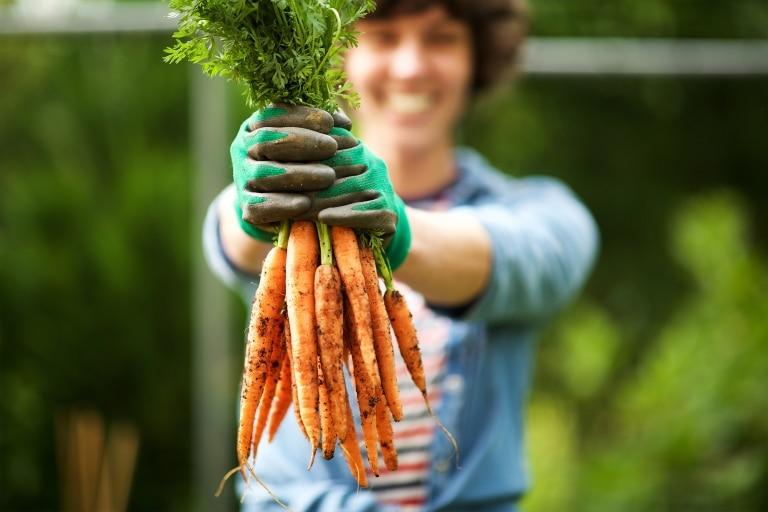 Frische Karotten aus dem eigenen Garten - der Villacher Saubermacher hat die richtige Erde für Sie.