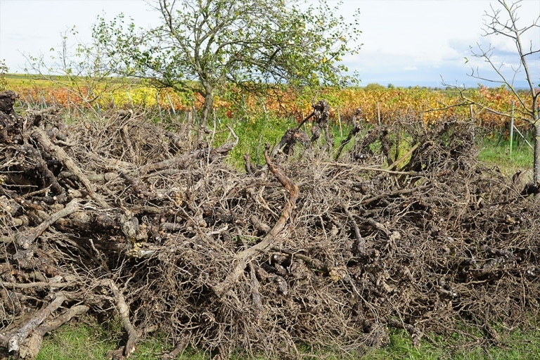 Wurzelstöcke, Baumstümpfe & Baumwurzeln